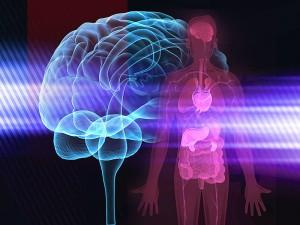 is_150611_brain_body_immune_system_800x600