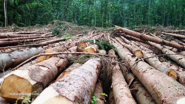 Logging-Forest-Deforestation-Logs-Cut-Wood
