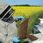 New Study Shows Common Insecticide Is Killing Bee Sperm