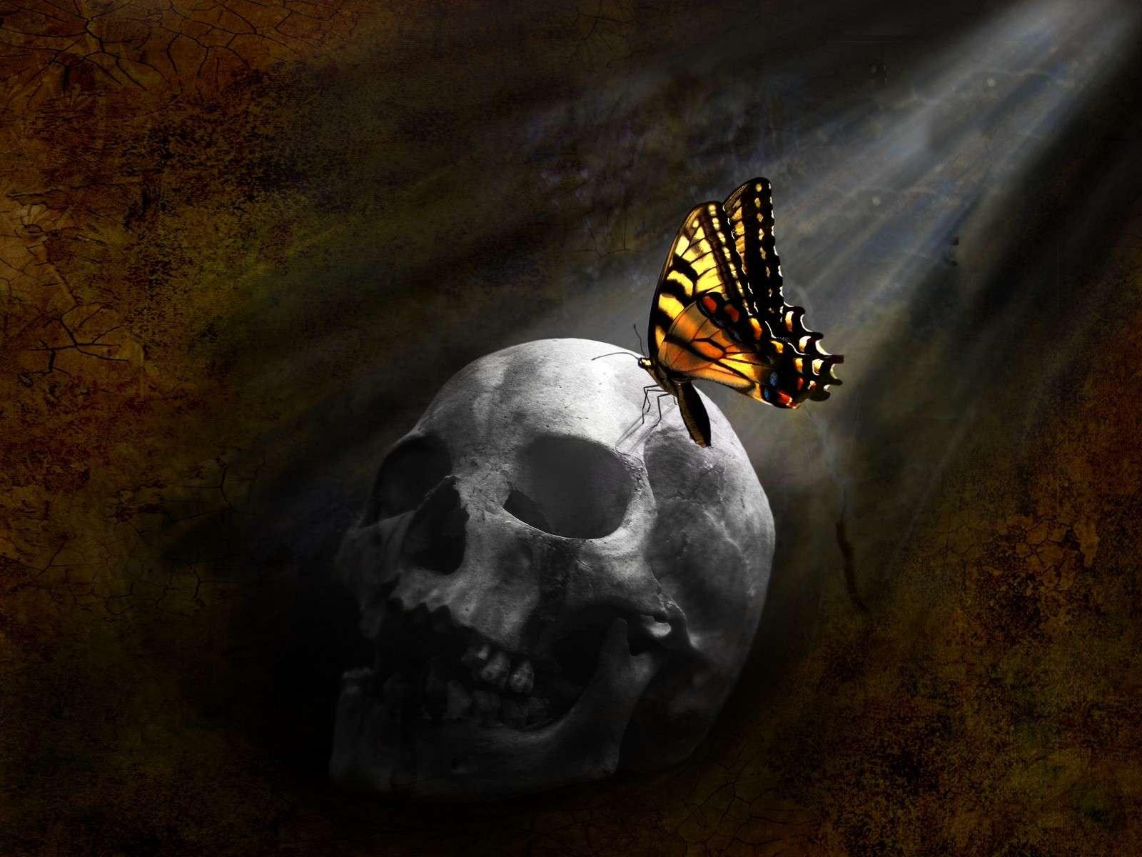 skull-monarch-butterfly
