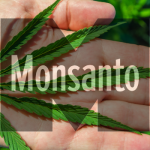 Bayer Monsanto Merger Will Steal the Marijuana Industry