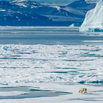 The Arctic Has Become A Toxic Reservoir Of Heavy Metals, PCBs And Other Deadly Chemicals