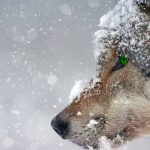 Wisdom for the Wolf-Age: A Conversation With Dr. Stephen Flowers