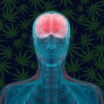 Cannabis – The Ultimate in Neuroprotection