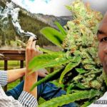 Mike Tyson Revolutionizing Weed Industry—Building Cannabis Mega Resort & Research Center