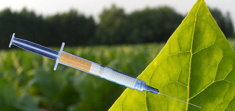 Using Tobacco to Make New Flu Vaccines: Was this Why the CDC Director Resigned?