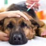 Over-vaccinating and the overdosing of pet vaccines