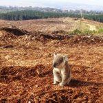 Berejiklian Government allows open slather on wildlife