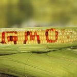 GMO GEOPOLITICS: OF SEED BANKS AND SYRIA