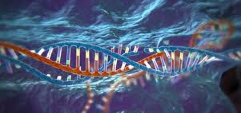 Gene therapy and the trans-human agenda