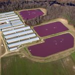 What will happen when Hurricane Florence hits North Carolina's massive pig manure lagoons?