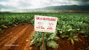 danger-sign-crops-farm-soil-gmo-pesticides