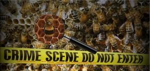 honeybees-e1415269577625