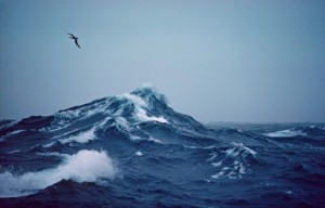 tumblr_static_campbell-albatross-over-large-wave_stormy-ocean____-vig_1550_c__sh_cr_r_g__md_6014-510x326