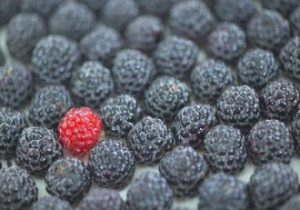 Eating-Black-Raspberries-Significantly-Lowers-Cardiovascular-Disease-330x231