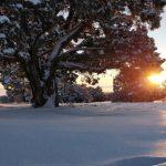 Christmas as a Solar Festival