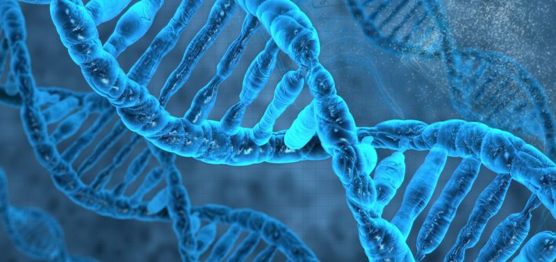 The Non-Physical Properties of Human DNA
